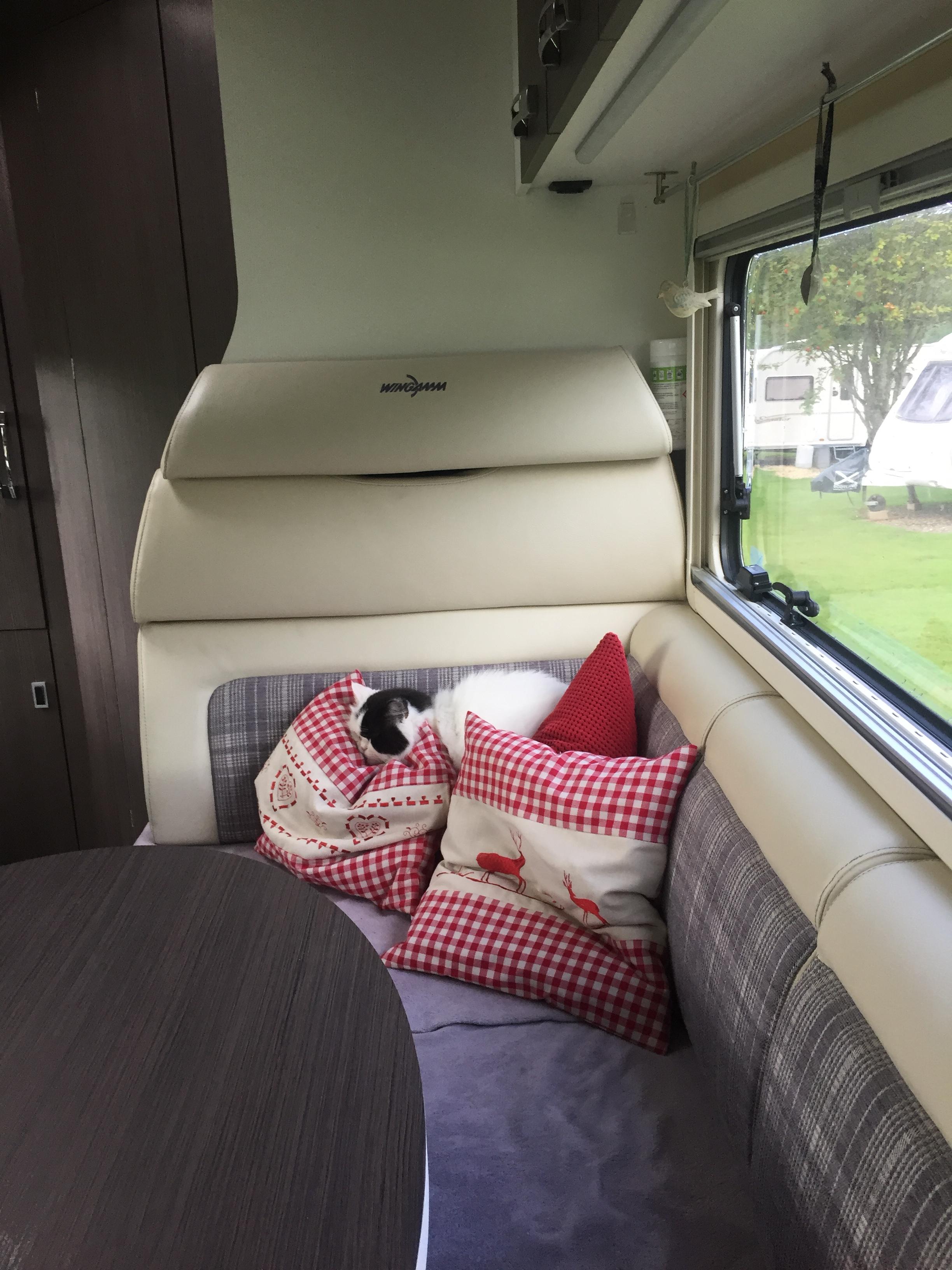 katze und wohnmobil geht doch reiseberichte tipps und informationen rund ums wohnmobil. Black Bedroom Furniture Sets. Home Design Ideas